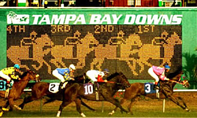 tampa bay downs has lots of wagering activities